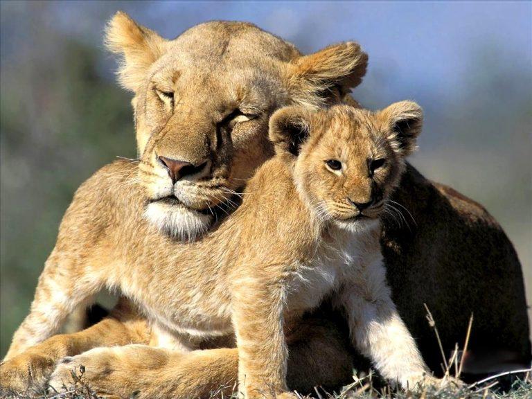 Dia da mãe / Jardim Zoológico