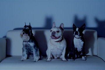 Netflix & Pets