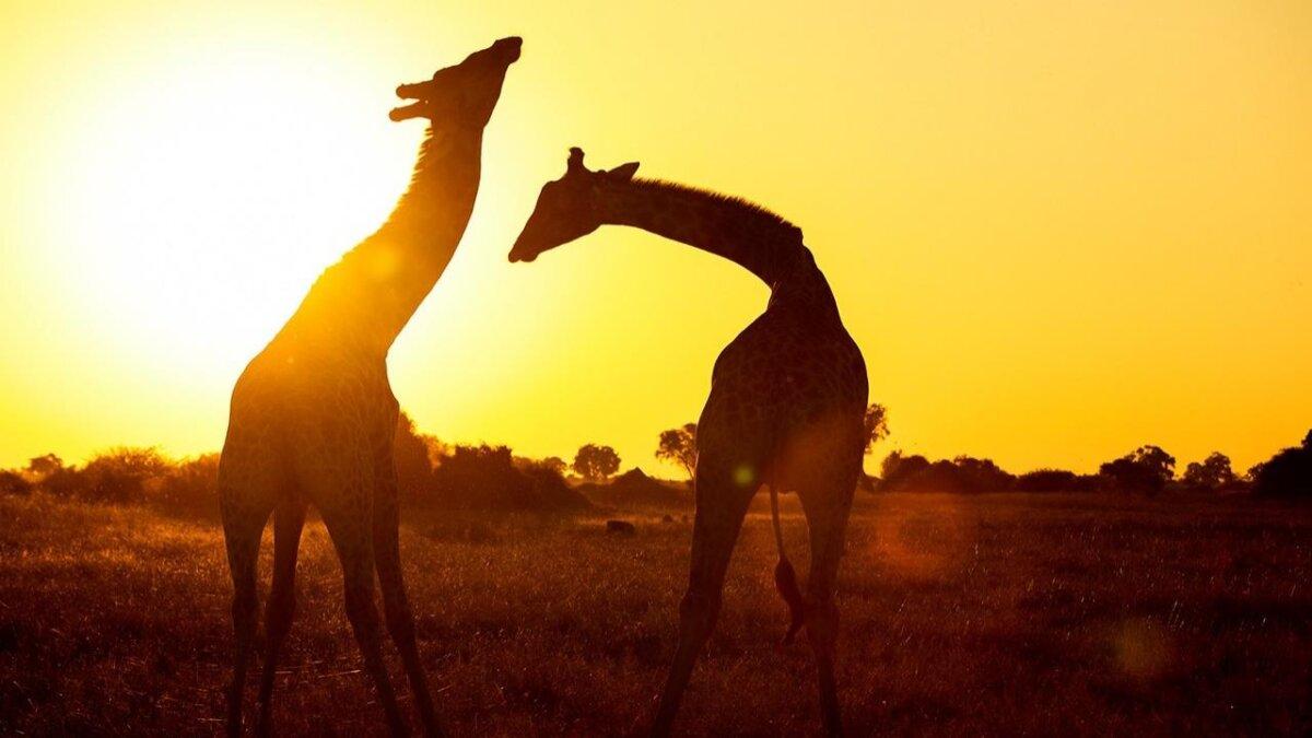 África Selvagem
